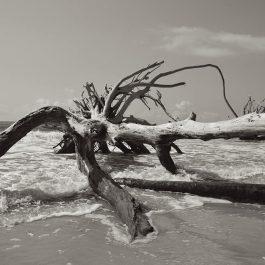 Botany Bay 4